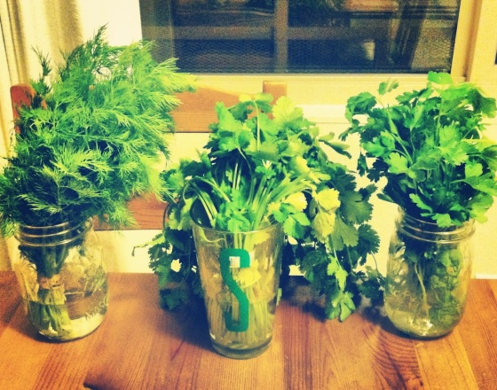 Makeshift herb garden keeps herbs fresh | kalelovesquinoa
